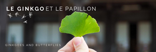 Newsletter Le Ginkgo et le Papillon / Ginkgoes and Butterflies